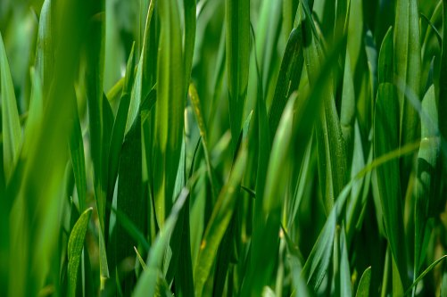 grass soup.jpg